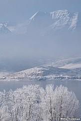 Eagle Frosty Timp 123020 7232 2