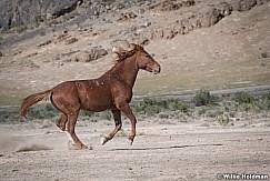 Mustang Run 051521 7743