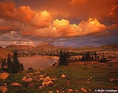 Uinta Moose Sunset