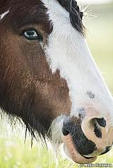 Horse Eye Portrait 050916 3468