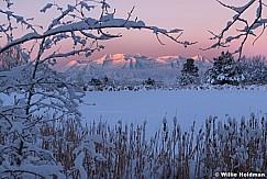 Timpanogos Snow Branches 112518 8541 6 2