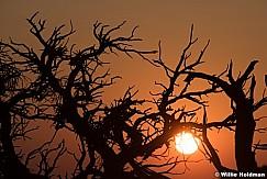 Teasdale Pine Sunrise 090117 6849