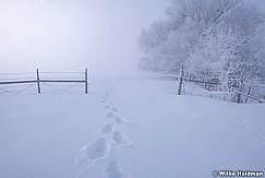 Winter Tracks 021719 7592