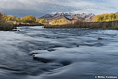 Silvers Provo River Timp 1101157