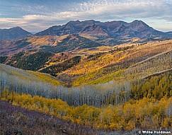 Yellow Aspen Hillside Timp 100920 5598