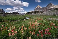 Teton Wildflowers 081119 758 0759
