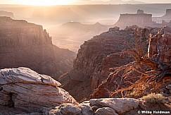 Canyonlands Overlook Tree 052618 6548
