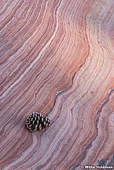 Sandstone Pinecone 113020 4936 2