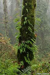 Fern Tree 102616 7305
