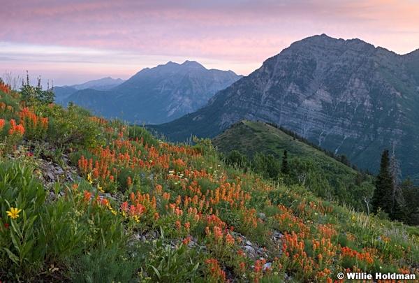 Pink Sky Wildflowers Timp 063016 3520