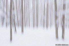 Aspen Impressions Winter 031319 9891