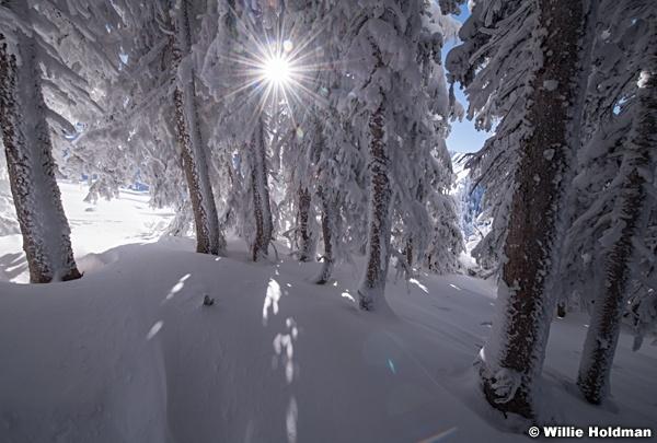 Frosty Trees Sunburst 120418 9388 4