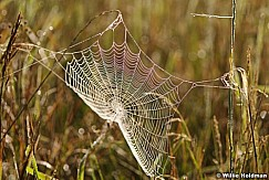 spiderweb080807 944