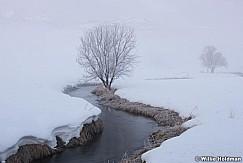 Icy Stream Tree 021716 4453