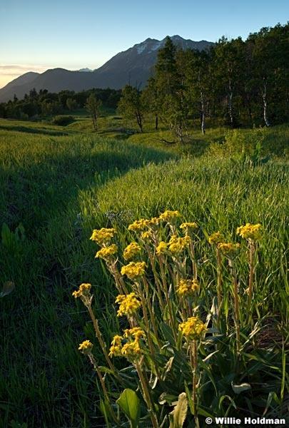 cascademeadowsflowersmergeflower061910 0759