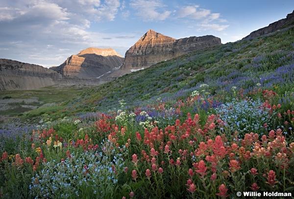 Timpanogos Wildflowers Last Light 072018 4123 3