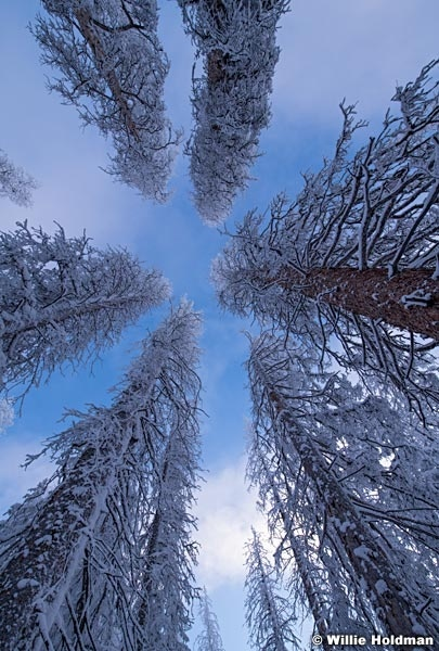 Heavenly Frosty Pines 123118 6