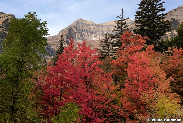Autumn Maples Timp 092016 4265 4