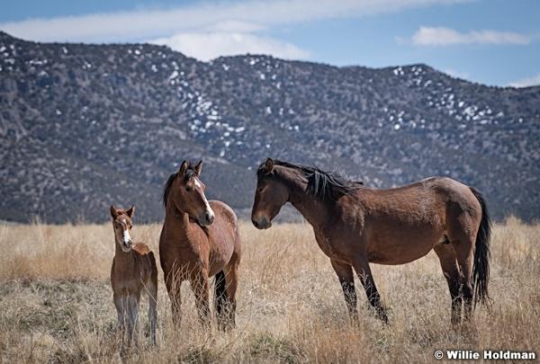 Wild Horses Colt 040320 0787 2