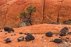 Lava Rocks Sandstone 102815 5