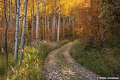 Autumn Golden Aspen Road 101017 1083 3