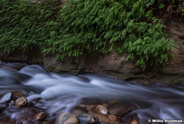 Ferns in Narrows 110619 4778 3