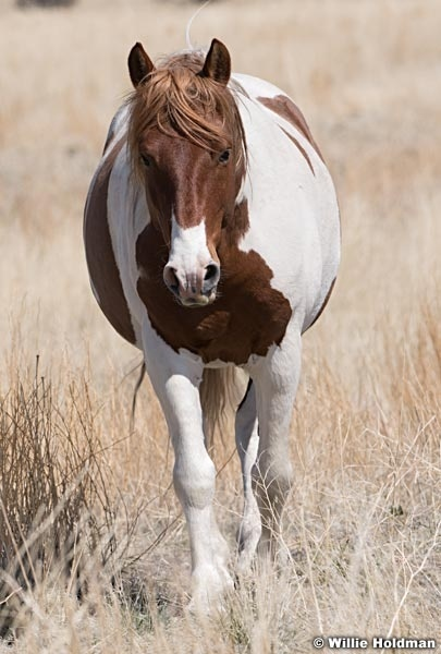 Wild Horses Colt 040320 0955 0955