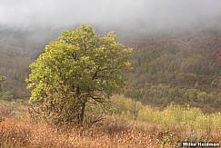 Oak Fog 092216 5012 3