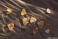 Cottonwood Leaves 102615 3