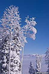Winter snow Aspens 011415 5183