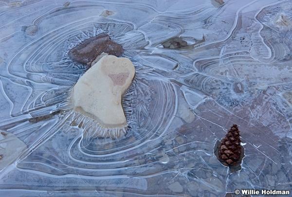 Ice Oak Leaf 021316 3203