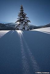 Snake Creek Pine 011417 1439