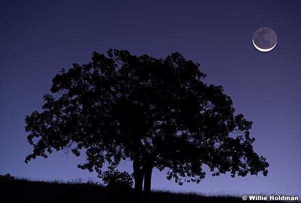 Lone Oak Tree Crescent moon 092619 1946 2 2