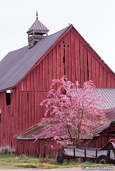 Bonner Red Barn Blossoms 042415 7551