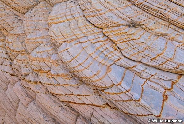 Teasdale Tree Sandstone 082520 2780 2