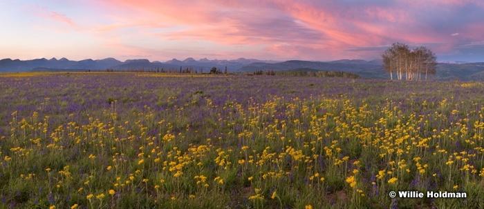 Wildflower Sunset Uintahs 062620 8857