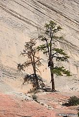 Sandstone Tree Shadow 042617 8959