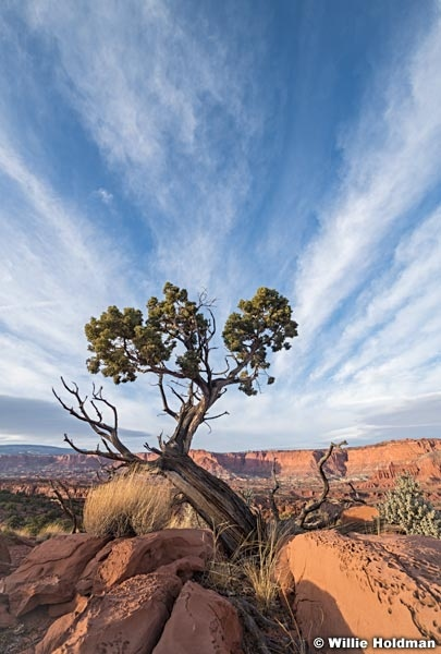 Capitol Reef Tree Clouds 111820 100