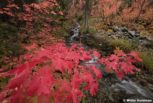 Red Maple Snake Creek 091920 9248 3