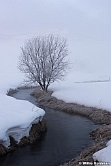 Icy Stream Tree 021716 4460