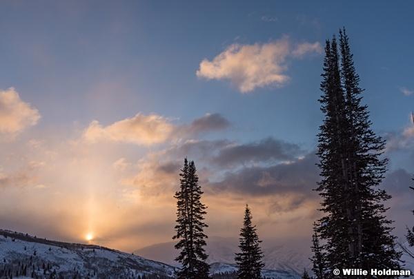 Winter Pine Sunrise 010217 7285