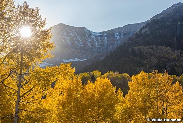 Autumn Golden Aspen Road 101017 1124 3