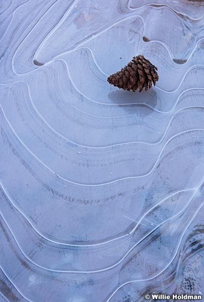 Pine Cone Ice 021316 3262