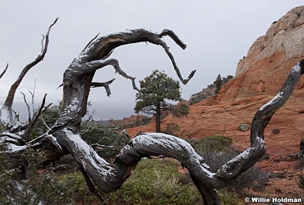 gnarley Tree 102815 4