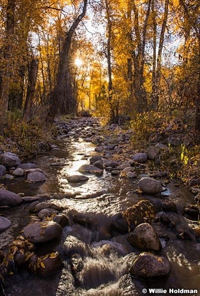 Lake Creek Cottonwoods 101917 2707 3