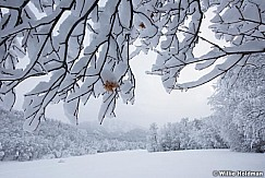 South Fork Winter Leaves 010517 9060 5