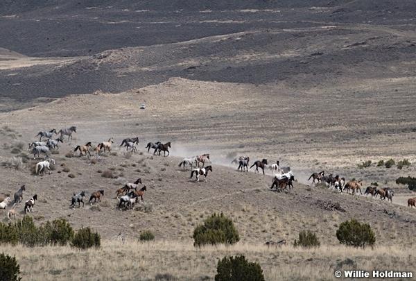 Wild Horses West Desert 042020 7260