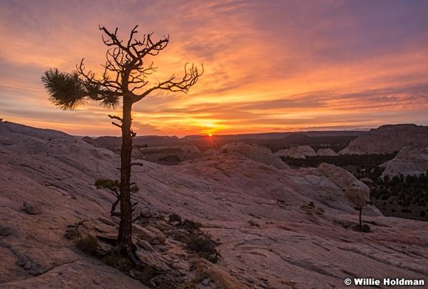 Torrey Sunrise 082716 7129