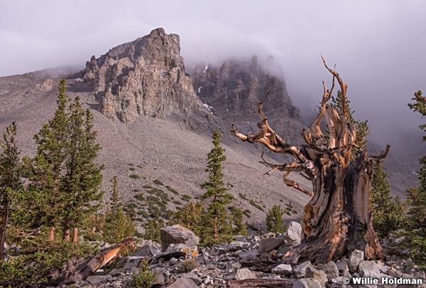 Wheelr Peak Bristle Cone 062612 8059