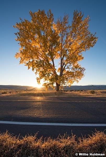 Cottonwood Tree Highway 102016 5763
